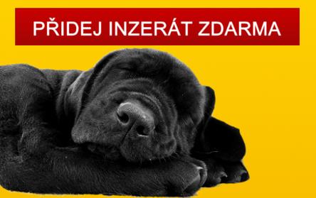 Přidat inzerát - štěně, pes, kůň, kočka