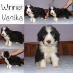 Winner Vanilka