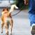 Rasy psů, o které je momentálně největší zájem